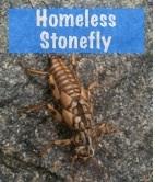 HomelessStonefly